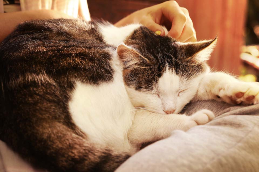 Helpful Advice for Caring for Senior Cats