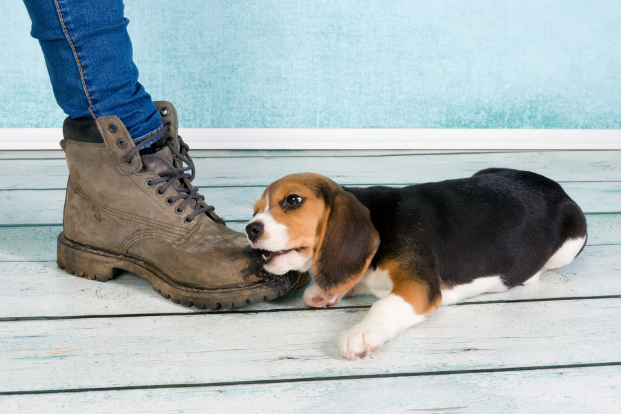 Puppy Training Tips: Stop Your Puppy from Chewing